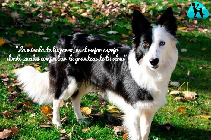 La mirada de tu perro, es el mejor espejo donde puedes comprobar la grandeza de tu alma.