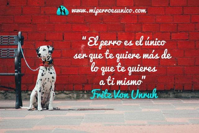 El perro es el único ser que te quiere más de lo que te quieres a ti mismo. Fritz Von Unruh