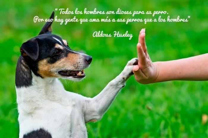 Todos los hombres son dioses para su perro. Por eso hay gente que ama más a sus perros que a los hombres.  Aldous Huxley