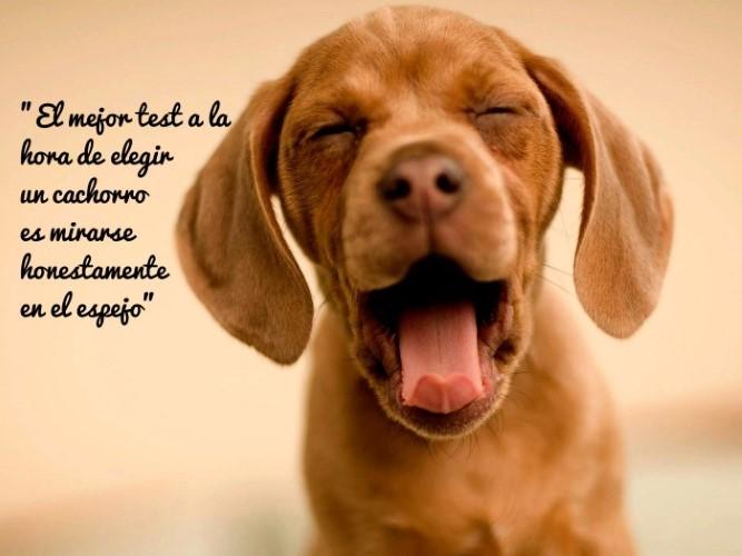 El mejor test a la hora de elegir un cachorro es mirarse honestamente en el espejo.