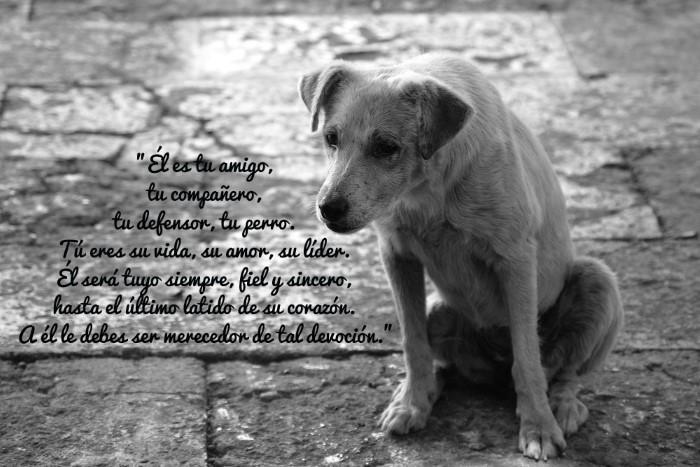 Él es tu amigo, tu compañero, tu defensor, tu perro. Tú eres su vida, su amor, su líder. Él será tuyo siempre, fiel y sincero, hasta el último latido de su corazón. A él le debes ser merecedor de tal devoción.
