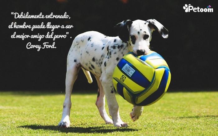 Debidamente entrenado, el hombre puede llegar a ser el mejor amigo del perro. Corey Ford
