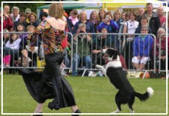 Freestyle Canino, un nuevo deporte para practicar con tu perro