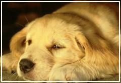 Cómo tratar la gastritis en los perros