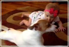 El perro que enseña a gatear a un bebe