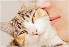 Cómo expresan los gatos su amor