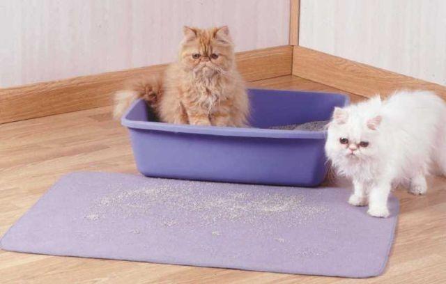 Pis del gato en la cama del perro de cedro