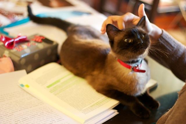 Un collar de gato hackea conexiones de internet