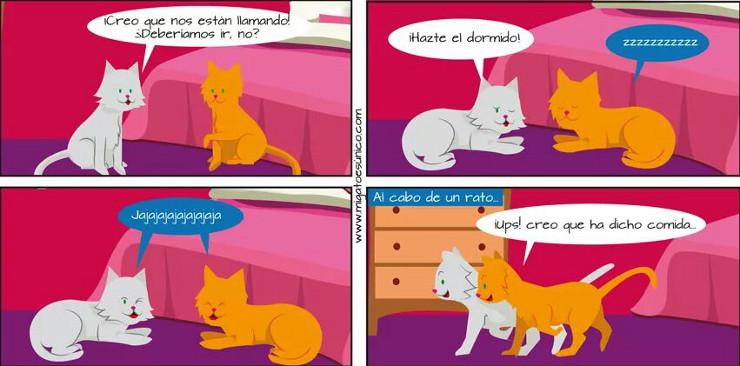 Gatos disimulando