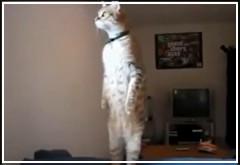 Compilación de gatos haciendo cosas divertidas y entrañables