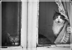 ¿Los gatos tienen memoria?