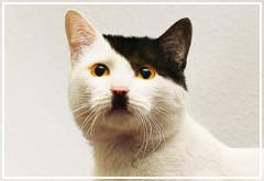 Ranking de gatos famosos (parte 2)