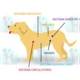 Infografía de alimentos prohibidos para perros