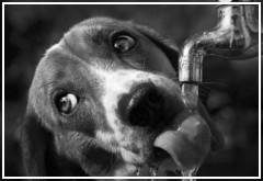 La hidratación en el perro
