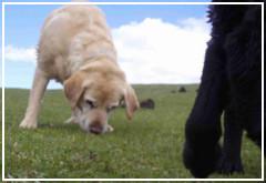 La potencia del olfato de los perros