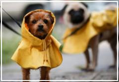 El efecto del sonido de la lluvia en perros