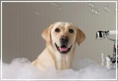 ¿Con qué frecuencia tengo que bañar a mi perro?