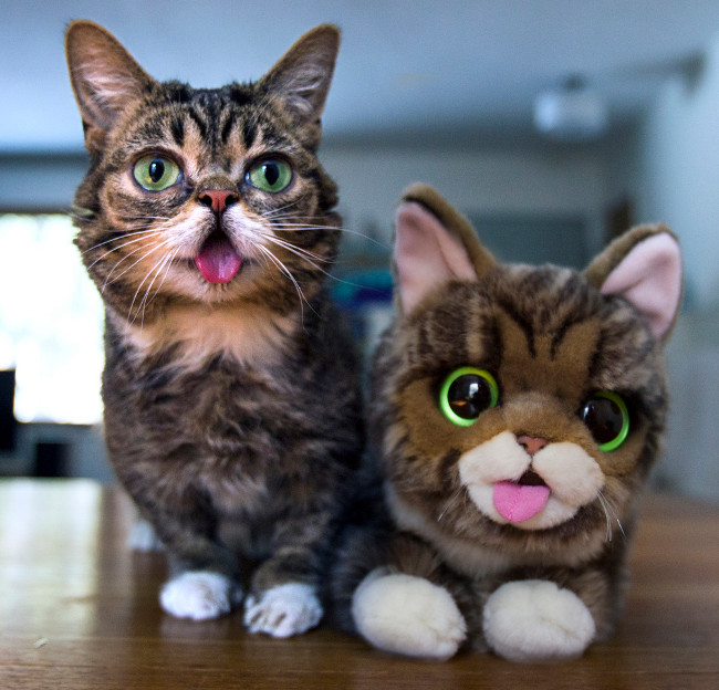 LilBub, la gata más especial del planeta