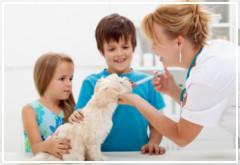 Los mejores fármacos contra las pulgas