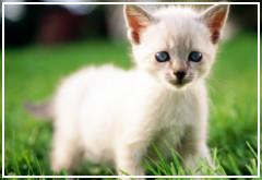 Me he encontrado un gato recién nacido