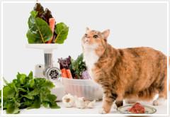 Factores nutricionales para tu gato