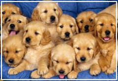 Cinco pautas para educar a tus cachorros