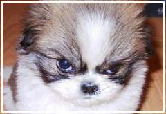 Quiero tener más de un perro ¿Qué debo hacer si se pelean?