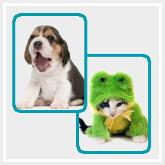 Memory - Mi perro es Único