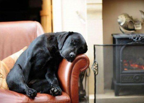 Mi perro se sube al sofá ¿qué puedo hacer?