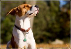 ¿Qué puedo hacer para que mi perro viva más años?