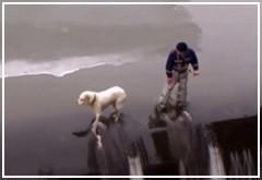 Top 10 Rescates a perros