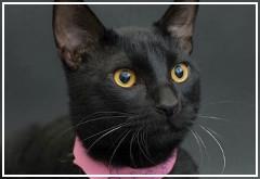 Proyecto para promover la adopción de gatos negros