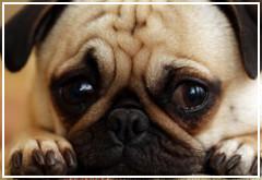 El contacto visual con nuestro perro aumenta la oxitocina