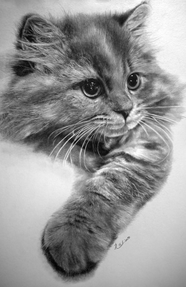 Paul Llung Dibujos De Perros Y Gatos Mi Perro Es único