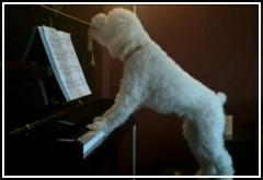 Perro cantando y tocando el piano