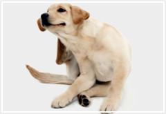 Cómo tratar la alergia en tu perro