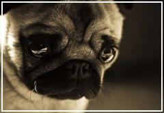 El estrés en los perros: causas y remedios