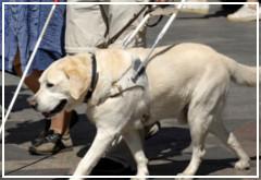 ¿Sabes cómo actuar con los perros guía?