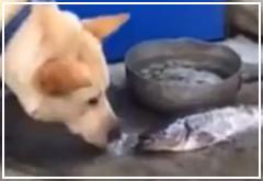 Perro trata de salvar a un pez