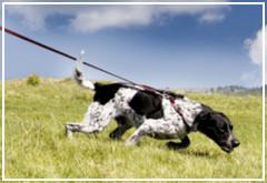 Cómo enseñar a tu perro a no tirar de la correa
