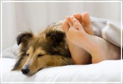 ¿Es bueno dormir con un perro?