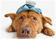 Reconocer y actuar ante enfermedades de mi perro