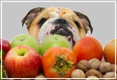 ¿Le puedo dar fruta a mi perro?