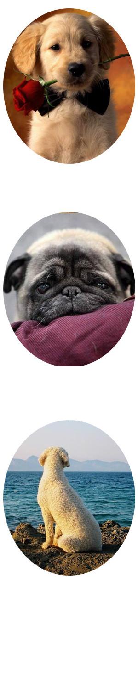 Poesias sobre perros, perritos y tu mascota