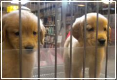 No se podrán vender gatos y perros en tiendas de animales