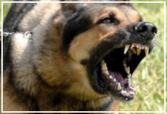 La rabia canina