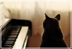 ¿Los gatos reaccionan positivamente a la música?