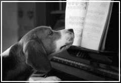 ¿Los perros reaccionan positivamente a la música?