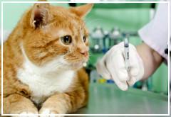 ¿Cuántas veces tengo que vacunar a mi gato?
