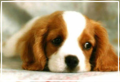Cosas que pueden dañar la salud de tu perro